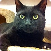 Adopt A Pet :: Dillinger - Warminster, PA