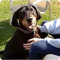 Adopt A Pet :: Roscoe - Dallas, TX