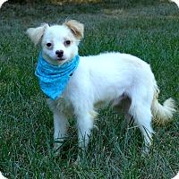Adopt A Pet :: Melvin - Mocksville, NC