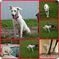Adopt A Pet :: Emma - Inverness, FL