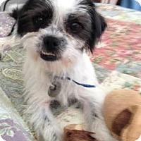 Adopt A Pet :: Maisy - San Diego County, CA
