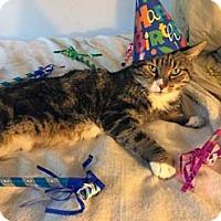Adopt A Pet :: Olivia - Merrifield, VA