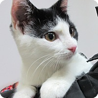 Adopt A Pet :: Dora - Glenwood, MN