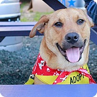 Adopt A Pet :: Tommy Boy - Austin, TX
