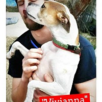 Whippet/Jack Russell Terrier Mix Dog for adoption in Seaford, Delaware - Vivianna