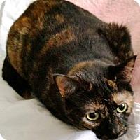 Adopt A Pet :: mazey - brewerton, NY