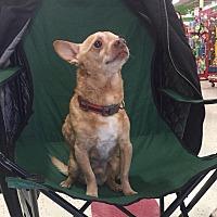 Adopt A Pet :: Rocky - Bridgewater, NJ