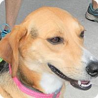 Adopt A Pet :: Livie - Umatilla, FL