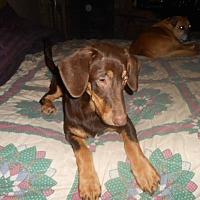 Adopt A Pet :: Carmel - North Jackson, OH
