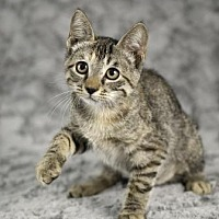 Adopt A Pet :: Sunspot - Gainesville, FL