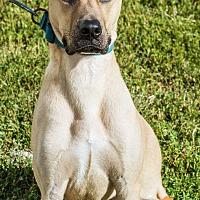 Adopt A Pet :: Brutus - Evansville, IN