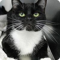 Adopt A Pet :: Karla - Tucson, AZ