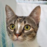Adopt A Pet :: Zada - Englewood, FL