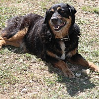 Adopt A Pet :: Grizzly - Bandera, TX