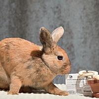 Adopt A Pet :: Cowgirl - Marietta, GA