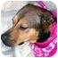 Photo 1 - Shepherd (Unknown Type)/Boxer Mix Dog for adoption in Cincinnati, Ohio - Megan