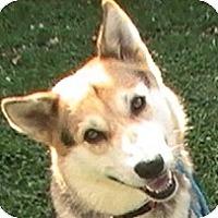 Adopt A Pet :: Emma - Georgetown, KY