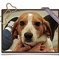Adopt A Pet :: Rocco - Portland, OR
