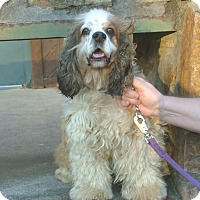 Adopt A Pet :: Gus - North Little Rock, AR