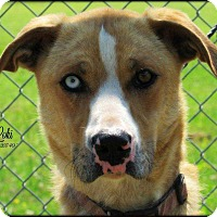 Adopt A Pet :: Loki - Disney, OK