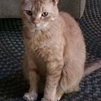 Adopt A Pet :: Ventura - Acushnet, MA