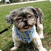 Adopt A Pet :: Chewey - Tavares, FL