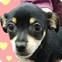 Adopt A Pet :: Aspen - Lexington, KY