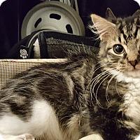 Adopt A Pet :: Mollie - Smithfield, NC