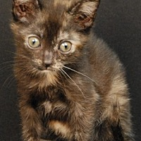Adopt A Pet :: Twix - Newland, NC