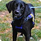 Adopt A Pet :: Brena (Has Application)