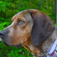 Adopt A Pet :: RANGER - Pittsburgh, PA