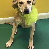 Adopt A Pet :: BETTY - Fort Pierce, FL