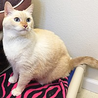 Adopt A Pet :: Sissy - Colorado Springs, CO