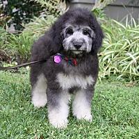 Adopt A Pet :: DURAND - Newport Beach, CA