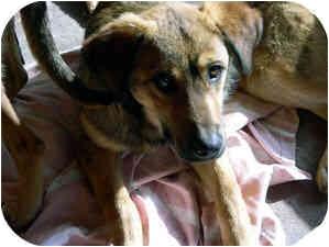 German Shepherd Dog Mix Dog for adoption in Santa Fe, New Mexico - Tilda