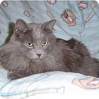 Adopt A Pet :: Taz - Modesto, CA