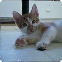 Adopt A Pet :: Ceviche - Davis, CA