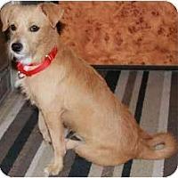 Adopt A Pet :: Shane - Gilbert, AZ