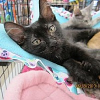 Adopt A Pet :: Teague - Long Beach, CA