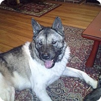 Adopt A Pet :: Yuki - Virginia Beach, VA