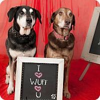 Adopt A Pet :: Lilly - Issaquah, WA