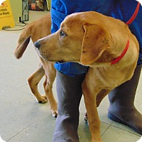 Adopt A Pet :: MARBLES - Cleveland, MS