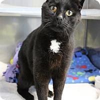 Adopt A Pet :: Becket - Medfield, MA