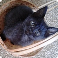 Adopt A Pet :: Brooke - Lebanon, PA