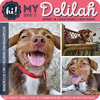 Terrier (Unknown Type, Medium) Mix Dog for adoption in New Port Richey, Florida - Delilah