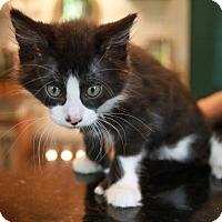 Adopt A Pet :: Robin - Palatine, IL