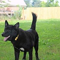 Adopt A Pet :: Trace - Portland, ME