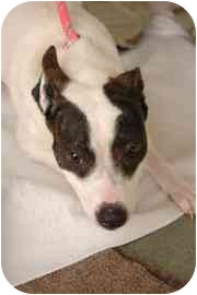 Terrier (Unknown Type, Small) Mix Dog for adoption in Walker, Michigan - Nadia