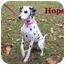 Photo 1 - Dalmatian Mix Dog for adoption in Bloomsburg, Pennsylvania - Hope