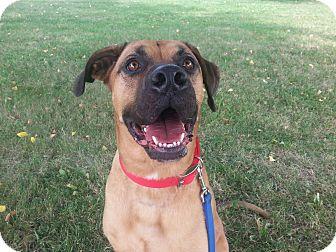 Rhodesian Ridgeback Mix Dog for adoption in Cedar Rapids, Iowa - Garth